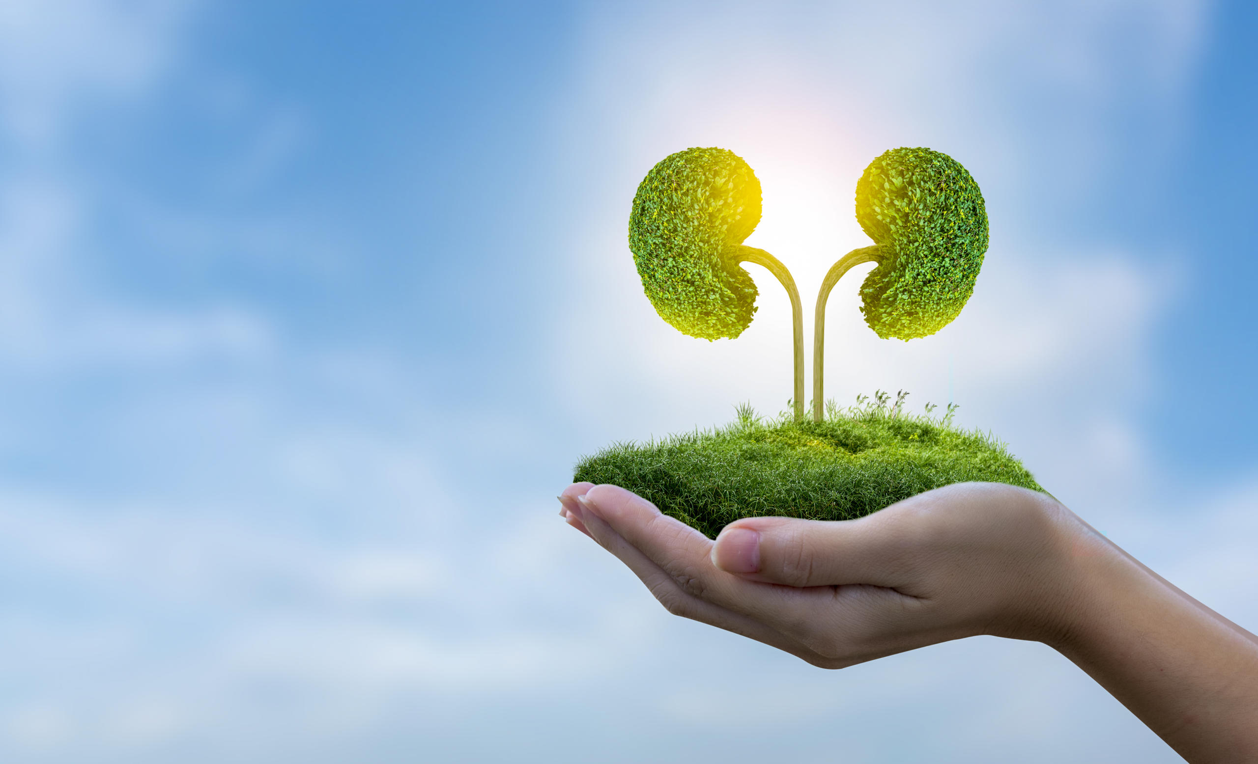 Healthy Kidneys: Image Of Person Holding Green Kidney Landscape Against Sky